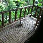 surprise visitor.