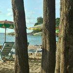 Сосны на пляже.