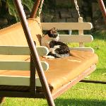 a cat soaking the winter sun