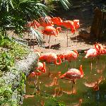 Flamingos at LoBald Eaglewry Park Zoo