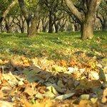 Яблоневый сад в октябре