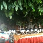 @ Jungle Restaurant