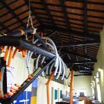 subysaurus is 4 meters high