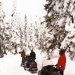 Snowmobiler's Paradise