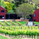 Luxury Vineyard Accommodation in the Hawkes Bay