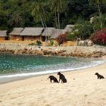 Don't stick your head in the sand... Yelapa!