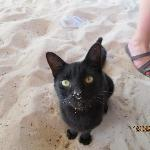 one if the beach cats
