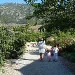Son Palou gardens