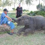 Lucky the Baby Elephant and his trainer