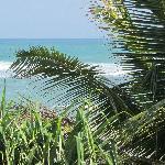 Beach view through palm trees