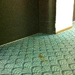 Feces on the carpet, probably from a toddler