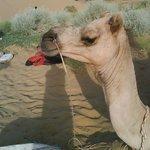 A camel!!!!