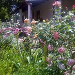 Garden outside dining room