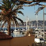 palmier du port