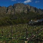 Boekenhoutskloof Vineyard