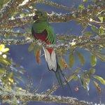 quetzal with avocado