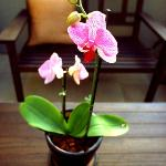 Orchid on the Porch