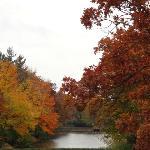 trees at park lake