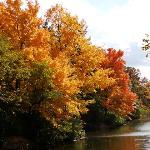 beautiful trees at park lake