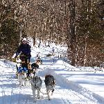 Dogsledding fun