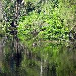 Pithlachascote River 2.