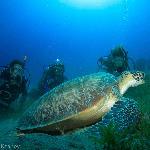 Black Rock Turtle