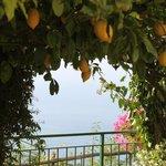 громадные лимоны оставили пару шишек на моей голове