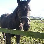 صورة فوتوغرافية لـ Upper Midgley Farm B&B