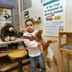 Animal Rescue clinic in Our Fabulous Forest gallery