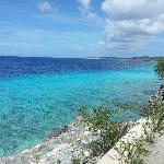 How can you not love Bonaire?