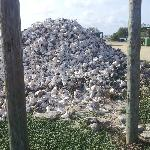 Pile of conch shells - not on Carib Inn property