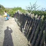 Cactus fencing