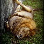 most animals were like this - too hot for them