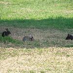 Bunnies everywhere - Al Navile - March 21 2012