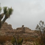 a joshua tree & one of many awesome rock formations in National Park nearby