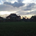 padi field view in 7am