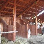 La nostra confortevole stalla per il tuo cavallo!