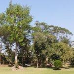 Lawn area