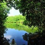 manglares Isla Grande