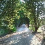 Fatoria Isola Laterina, oprijlaan naar Agriturismo