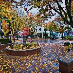 Downtown Camas is lovely in Autumn.