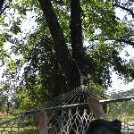 On a hammock