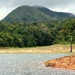 Thekkady Forest
