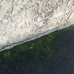 Green fungus on carpeted areas? That's a first. Doesn't happen overnight!