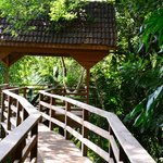 Take an elevated walk in the jungle, wow!