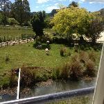 The view from Honeymoon Suite, Waitanic