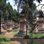 the pagoda-forest (graveyard)