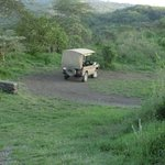 Auf Game Drive im Arusha Nationalpark
