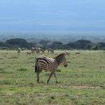 Nähe Amboseli