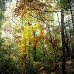 Fairmont Park- Fall